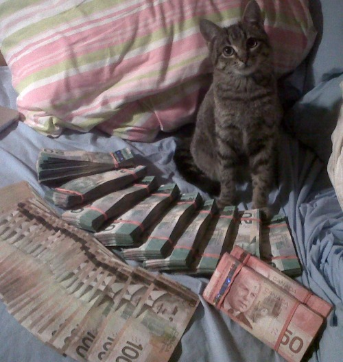 Cat's ballin in money