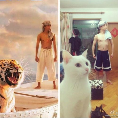 thatcatladylife:  Life of Pi (;