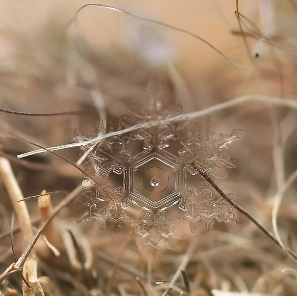 starbot:  myedol:  Macro Snow Flakes These wonderful macro shots of fragile snow flakes by Moscow based photographer Andrew Osokin display the more delicate side of winter that is often lost among the bitter weather that people associate this time of year with. I can only imagine how much patience Andrew had to capture these perfectly symmetrical shapes before they melted away forever.  Artists: | Website | [via: Bored Panda]