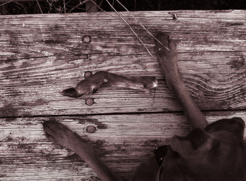 © Deer Season 2012, Dog Walk Series