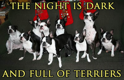 The night is dark and full of terriers.