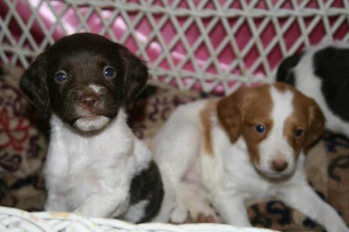 THIS IS OUR PUPPY. THIS IS THE PUPPY MY MOM IS GETTING TODAY. THE BROWN ONE, WITH THE LITTLE WHITE SPLOTCH ON HER NOSE. How do you guys like the name Olive? Olly for short? Mom and I liked Scout for a girl too, but Libby and Dad don't like it.