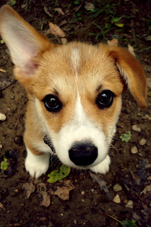 holymakattack:  Henry, when he was still tiny and lopsided.