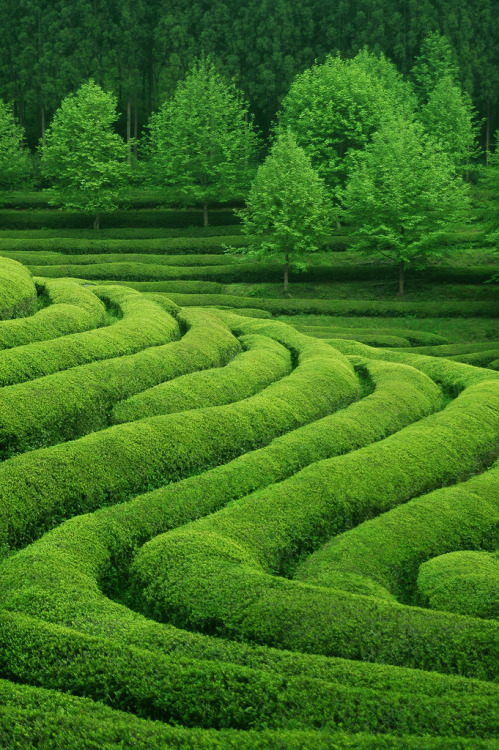 lamescapes:  Tea Waves