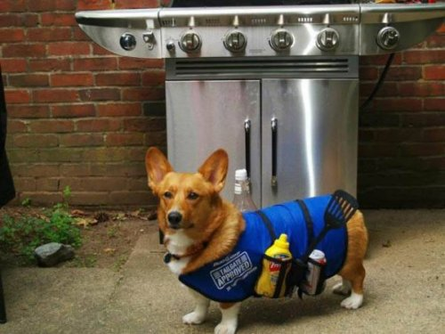 This corgi would like to talk to you about propane, and propane accessories.