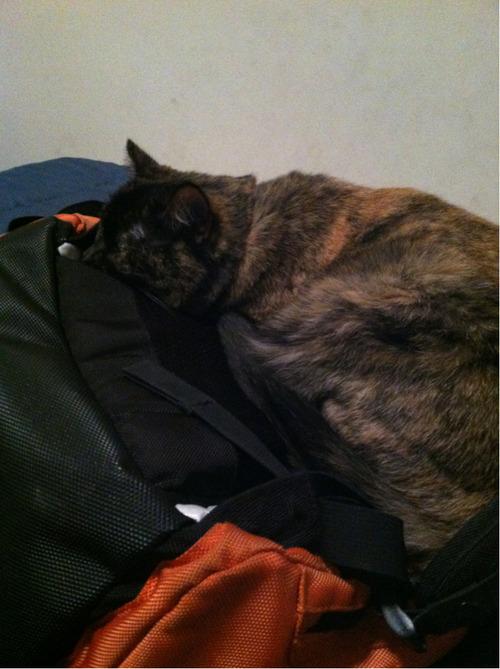 i have homework to do, cat.