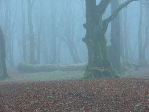 Forest on a foggy winter day by follc on Flickr. http://www.goodreads.com/book/show/13602411-zombies-for-breakfast #zombielove