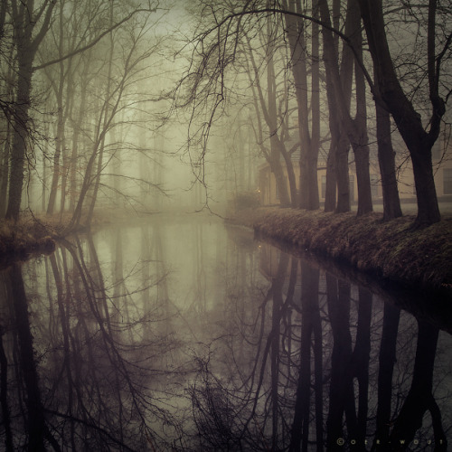 mykindafairytalee:  In Fog we Trust by =Oer-Wout