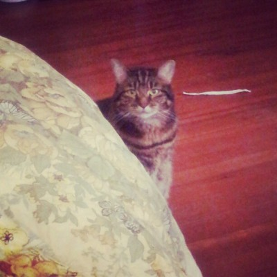 I'm being watched #catstagram (at Rose's homestead)