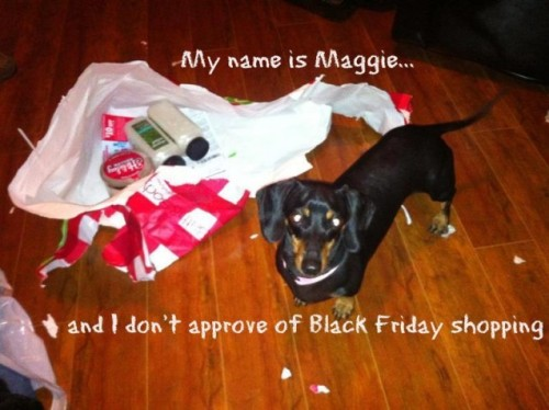 Maggie Doesn't Approve of Black Friday ShoppingThis is 5 year old Maggie from Tampa, Florida. Maggie is the sweetest dog in the world, however we…View Postshared via WordPress.com