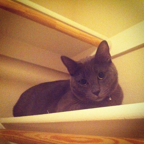 Tahoe protesting the move by hiding in our empty closet. Poor fur buddy! #petstagram #instagood #instagramers #neko #cat #cats #kitty