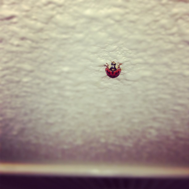Found a #ladybug in my house!!