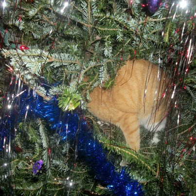 get out of there cat. i'm tired of finding tinsel in the litterbox.