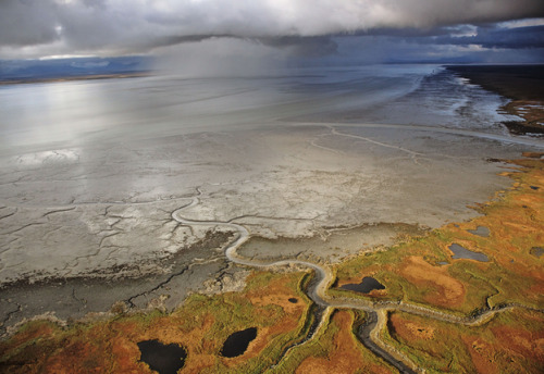 "rhamphotheca:  GIANT STRIP MINE THREATENS ALASKA'S ICONIC BRISTOL BAY   PICK THE WORST PLACE ON THE PLANET FOR A GIANT STRIP MINE, IN THE HEART OF AMERICA'S WILDEST AND MOST PRODUCTIVE ECOSYSTEM. THAT'S EXACTLY WHERE ONE IS PLANNED.   by Ted Williams What possibly could unite these diverse and in some cases adversarial players in outrage and action: 700 businesses; 700 hunting and angling groups; 77 commercial fishing groups; 200 chefs and restaurant owners; the National Council of Churches, representing 45 million people; major newspapers; leading jewelry retailers; and ultra-conservative legislators? It would be a plan to gouge and hack the Bristol Bay watershed of southwest Alaska with the continent's biggest strip mine. A vestige of what America used to be survives here. The region is the size of Ohio, with a population of 7,500. It is changeless and timeless, laced by pristine rivers that rush and dawdle through forests never logged and un-scarred tundra that alternately blazes with wildflowers and glistens with snow. There are no access roads. You enter by plane or helicopter, threading between jagged, ice-clad peaks. The vastness and wildness start to sink in after you've flown for, say, two hours and seen no hint of human defilement. Everything about Bristol Bay takes someone's breath away. For me it's the beauty, the fishing, and especially the wildlife. For folks like John Shively, CEO of the Pebble Limited Partnership, it's the $500 billion worth of copper, gold, and molybdenum in the ""Pebble Deposit"" under the headwaters of the world's two most productive salmon rivers—the Kvichak and the Nushagak… (read more: Audubon Magazine)           (photo: Michael Medford/Nat. Geo.)"