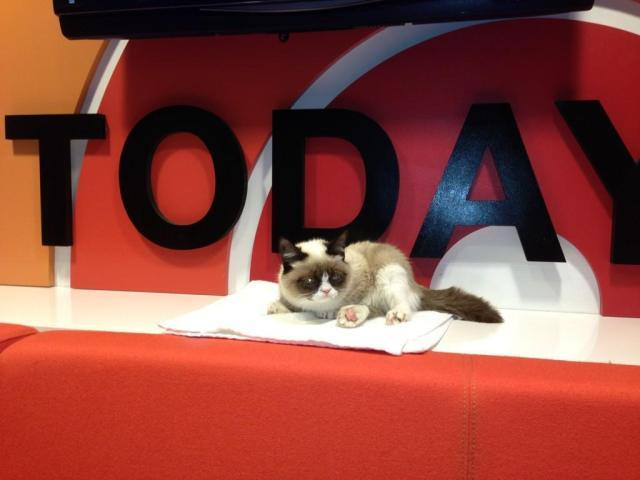 Grumpy Cat on The Today Show