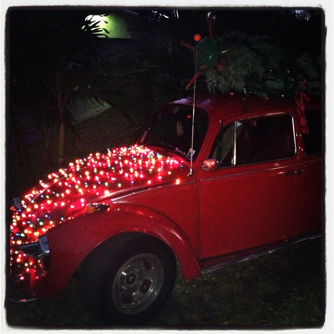 Beetle after the Christmas parade! :)
