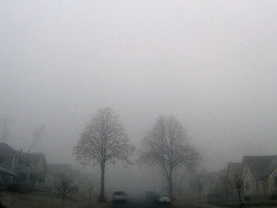 Foggy morning in Minneapolis - our block. Our two proud trees.