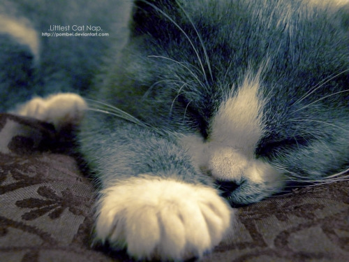 """Littlest Cat Nap"" Check out more photos and other art on my deviantART page!"