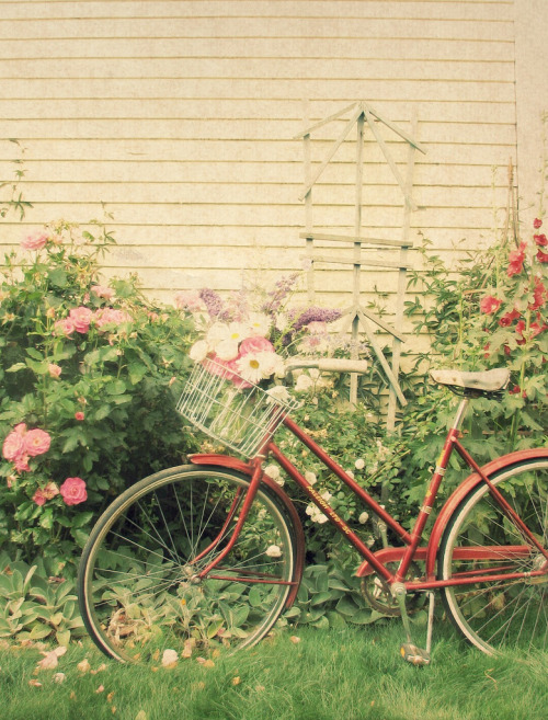 Vintage Bicycle Bouquet (by Trisha Brink Design)