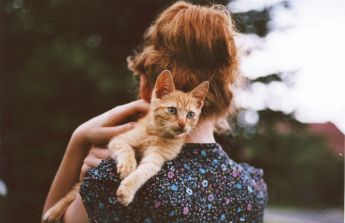 little red kitten (by worteinbildern)