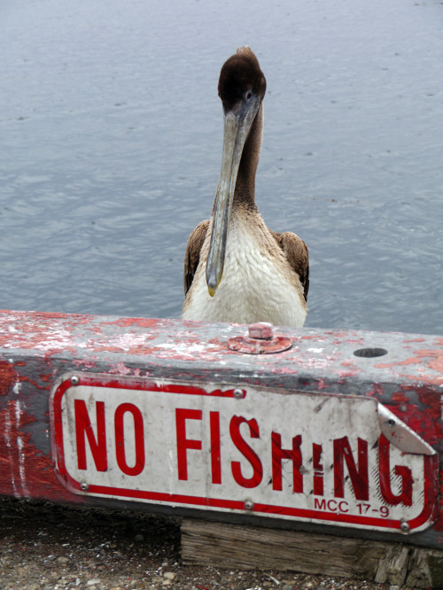 Pelly can fish whenever he darn well wants.
