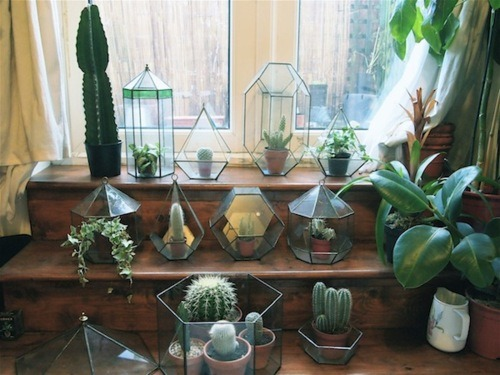 janeanger:  I like this because my cacti are my only plant friends.