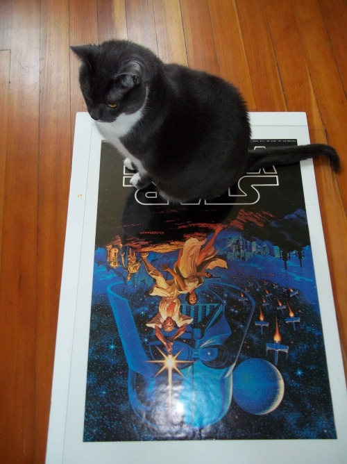 get out of there cat. you are not a vintage poster. you are not being sold on ebay. You don't even like Star Wars.