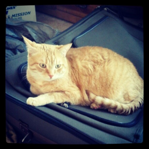 no, you cannot go on my trip with me. and you're not really keeping me from packing. i'm taking two bags.