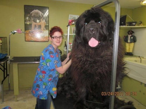 guceubcuesu:  clifford the big black mother fucker