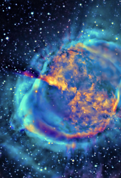 cosmic-soul-searcher:  Dumbell Nebula