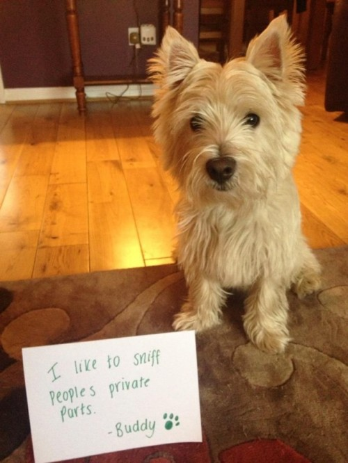 Buddy's Confession. Buddy would like a moment of your time to share with you his deepest, darkest confession.View Postshared via WordPress.com