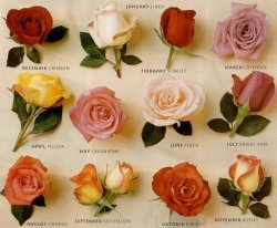 a rose for each month