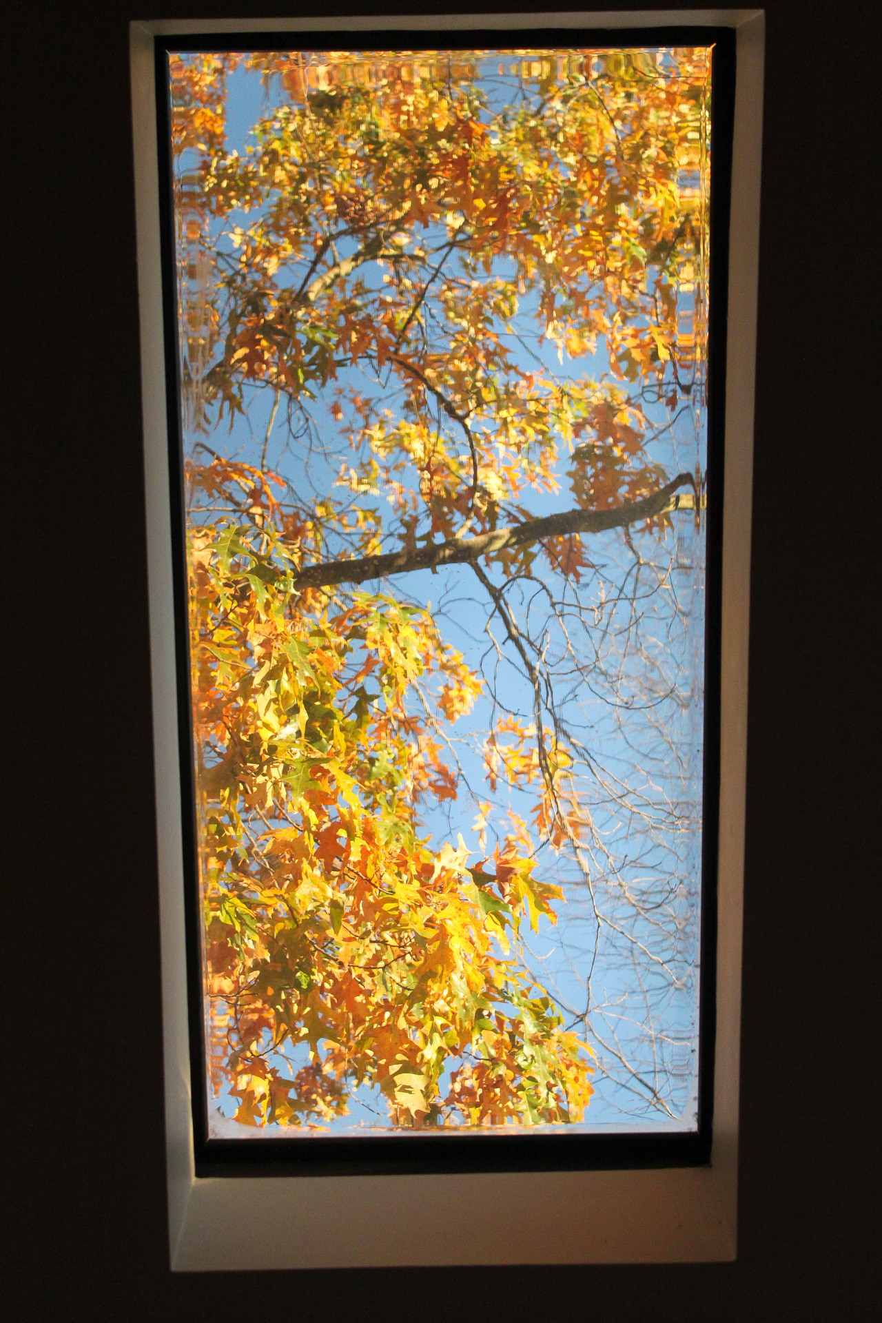 Looking out the skylight in my enormous bathroom.