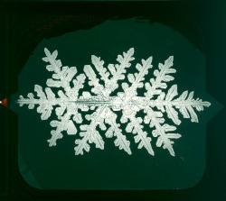 Snowflake photographed by Alwyn Bentley. Found here.