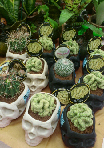 Oh gosh I want a cactus in a skull pot thingy! So badly! I need more cacti in my life, you know.