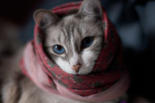 Google the cat by Pola MurMur on Flickr