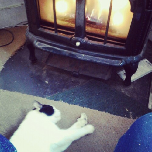 The cat likes to get cozy at the fire too :3