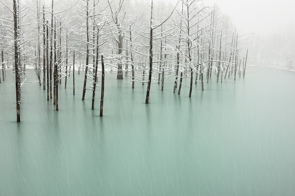 frozen pond | japan ~ kent shiraishi photograph