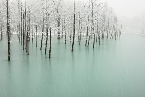 remash:  frozen pond | japan ~ kent shiraishi photograph