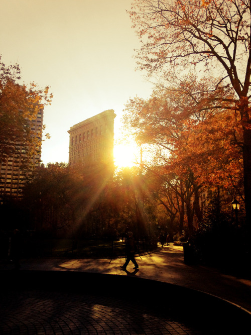 "Flatiron Building sunset. Autumn. Madison Square Park. New York City.  Late autumn in New York City has its own brisk beauty. Cold air sharply punctuates the end of every wind gust and the sun retreats earlier and earlier every day. Autumn clings to December in the brief moments before the trees drop their leaves to the ground for good and every afternoon sunset reaches through the sharp cold with its lighted fingers in one last dramatic attempt to bring warmth to the city.   —-  This particular view is of the Flatiron Building, one of New York City's unique and classic skyscrapers, as seen from inside Madison Square Park during autumn.    —-  View this photo larger and on black on my Google Plus page  —-  Buy ""Flatiron Building Sunset - Autumn - New York City"" Prints here, email me, or ask for help."