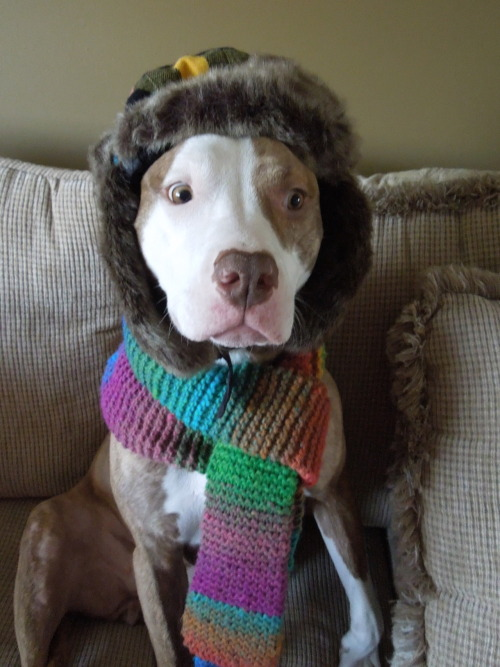 "petswhowanttokillthemselves:  ""Oh, no. Please! Don't make me wear the Uggs.""   Samara from Kim in Olathe, KS"