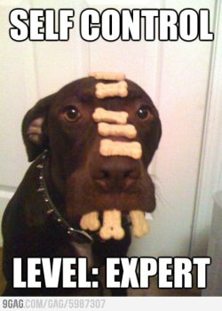 9gag:  Self Control Expert   My dog has moderate skill on self-control. I can leave my plate without worrying that he might cop some food. However, I've caught him once trying though.