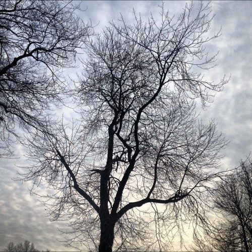 #nofilter #tree #silhouette #branches #skyporn #instagrammers #igdaily #instadaily #ignature #instanature #ilovenature #beautifulsky #beautifulnature #real #sunset #eerie #instahub #instamood #natureonly #iphoneonly #tree