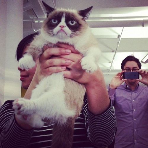 Grumpy Cat has officially arrived at BuzzFeed HQ!