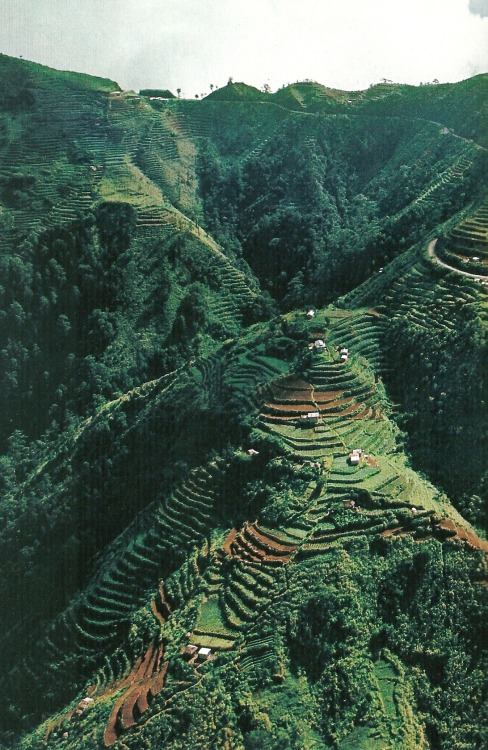 vintagenatgeographic:  Potato Fields in the Philippines National Geographic | May 1982