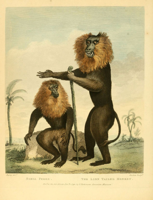 gallantcannibal:  C.R. Ryley engraving of two charming Lion-Tailed Macaques from the Museum Leverianum. The entire book is available from the Biodiversity Library.