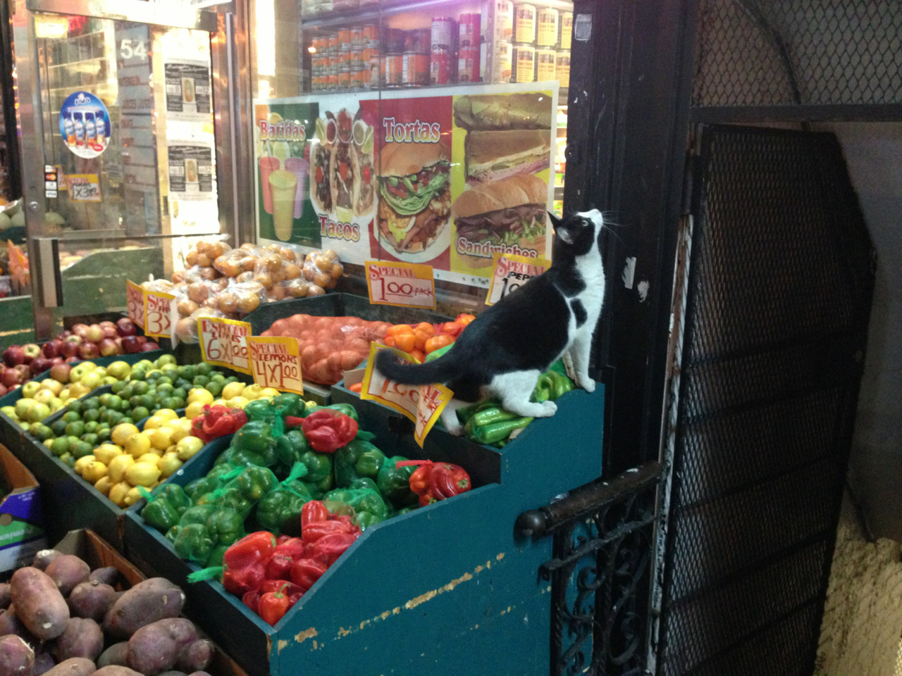 Get the red peppers, the ones next to the cat…