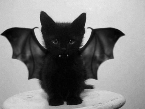 annifoxx:  I just love cats and bats ^^