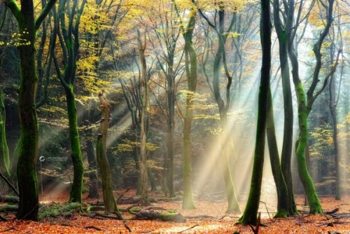 Basking by Lars van de Goor