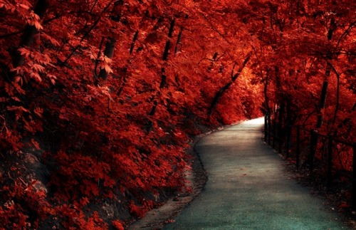 aerohostile:  Flaming Path by Laszlo Gal